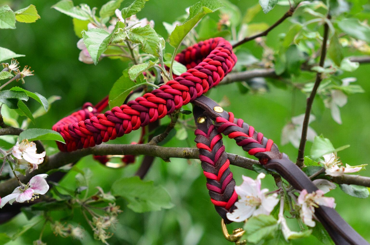 Knallige Rottöne passen perfekt zum Dunkelbraun der Leine, hier kann man schon erahnen wie toll das Halsband der schockobraunen Labbidame Ylvie steht.