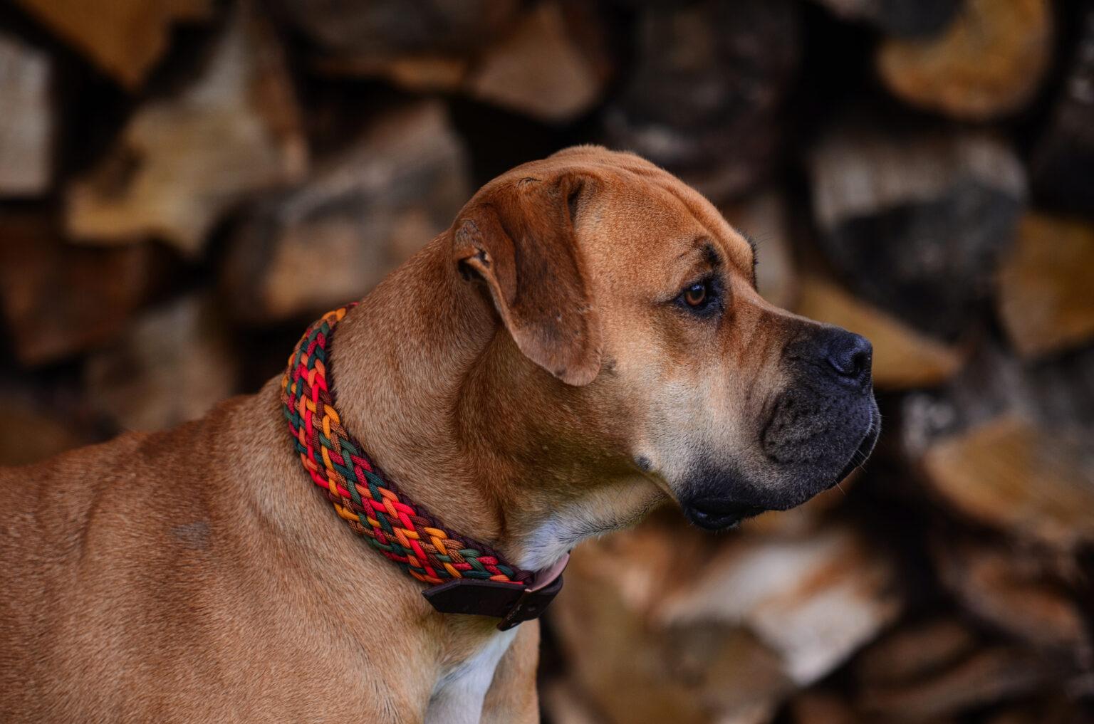 Herbstliche Farben passen ausgezeichnet zum rötlichen Fell von Nala. Die Lederschnalle ist ein zusätzliches Highlight.