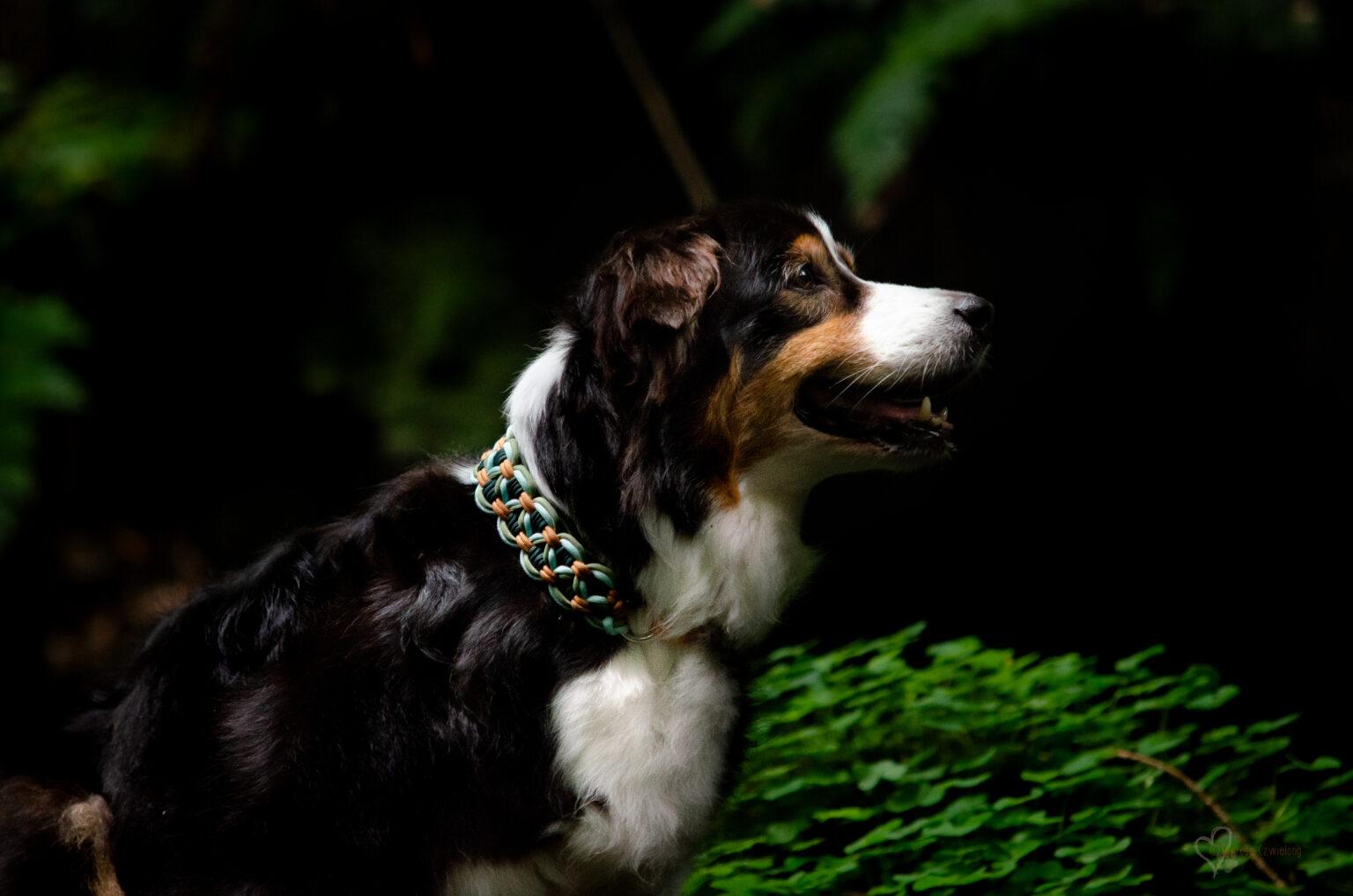 Ab einem gewissen Alter darf es ein leichtes, ganz weiches Halsband sein - für Jada  ist die Spielwiese perfekt.